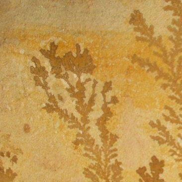 Piedras Segovia - Piedras regulares - Varios modelos: Menta fósil